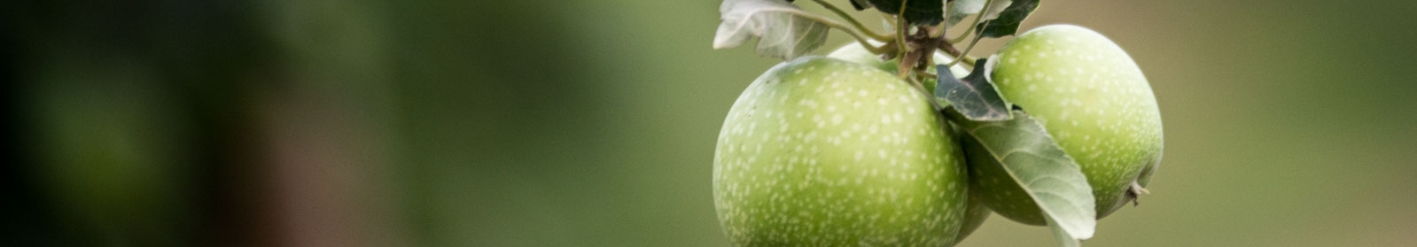 apple_header